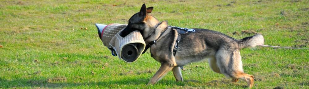 Pakwerk jongen honden